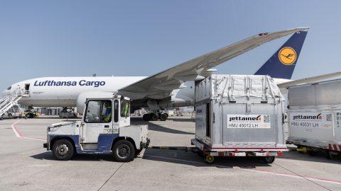 Indústria automotiva e fruticultura impulsionam retomada dos resultados da Lufthansa Cargo no Brasil