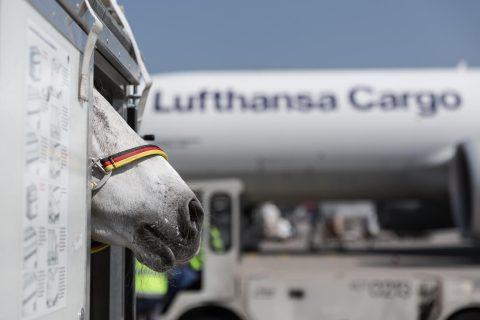 Animal Lounge da Lufthansa em Frankfurt completa 10 anos