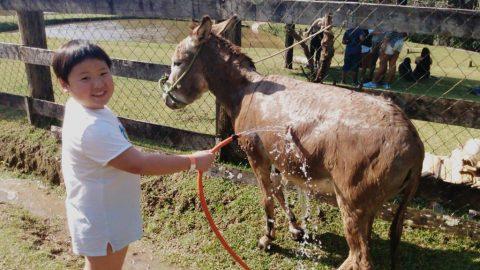 Um dia na Fazenda sem sair de São Paulo? Aplicativo de passeios com crianças indica 7 atrações para ter contato com animais e clima rural